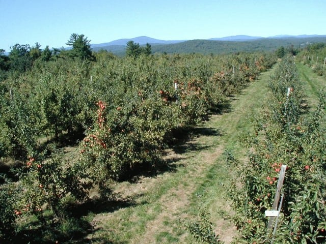Carter Hill Orchard - Concord