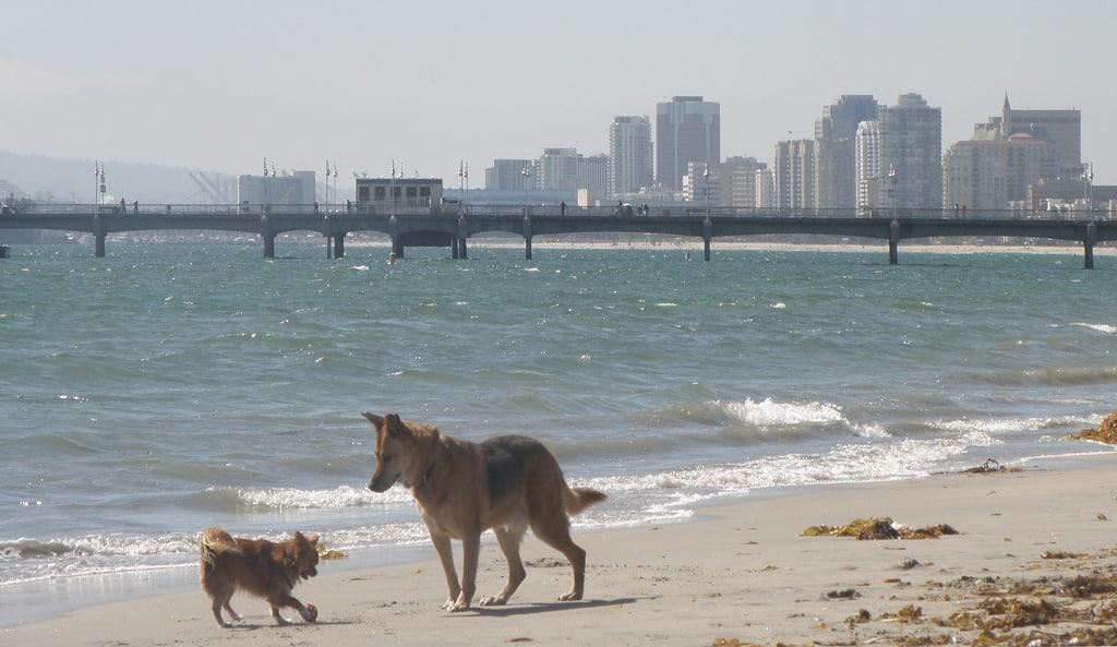 Top Dog Parks In Palm Beach