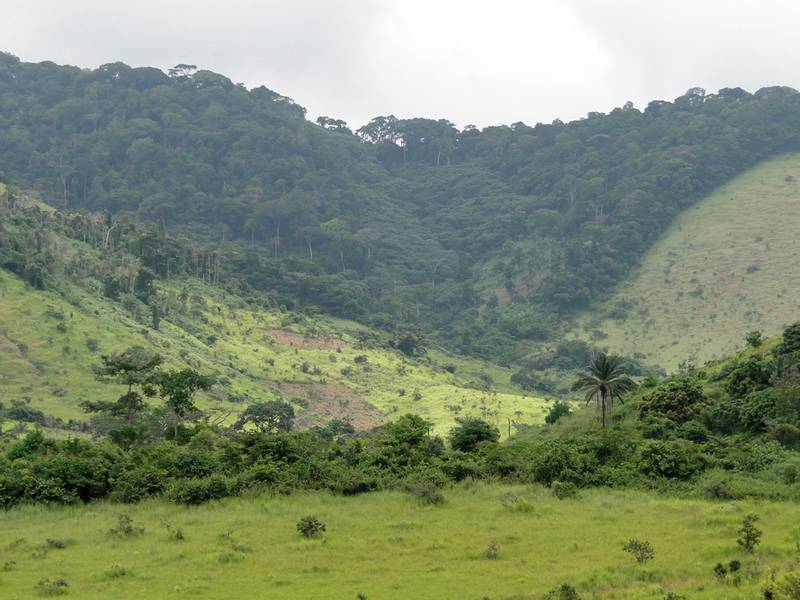 Maiombe Forest