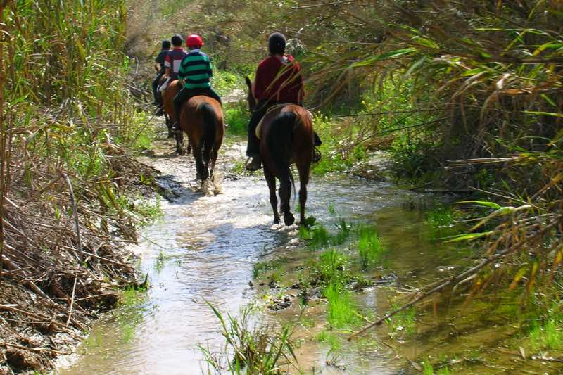 Horseback Riding in Paphos