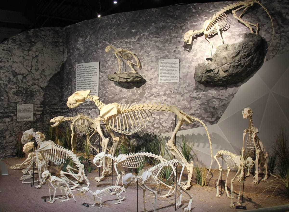 Skeletons - Museum Of Osteology