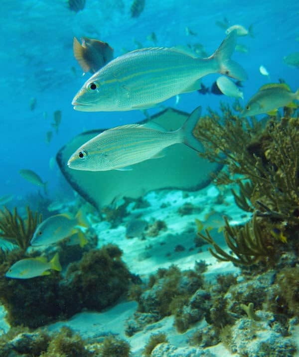 Snorkeling Cayman Islands