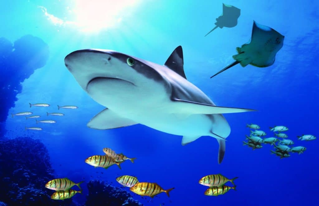 15 best things to do in torremolinos spain page 9 of for Aquarium torremolinos