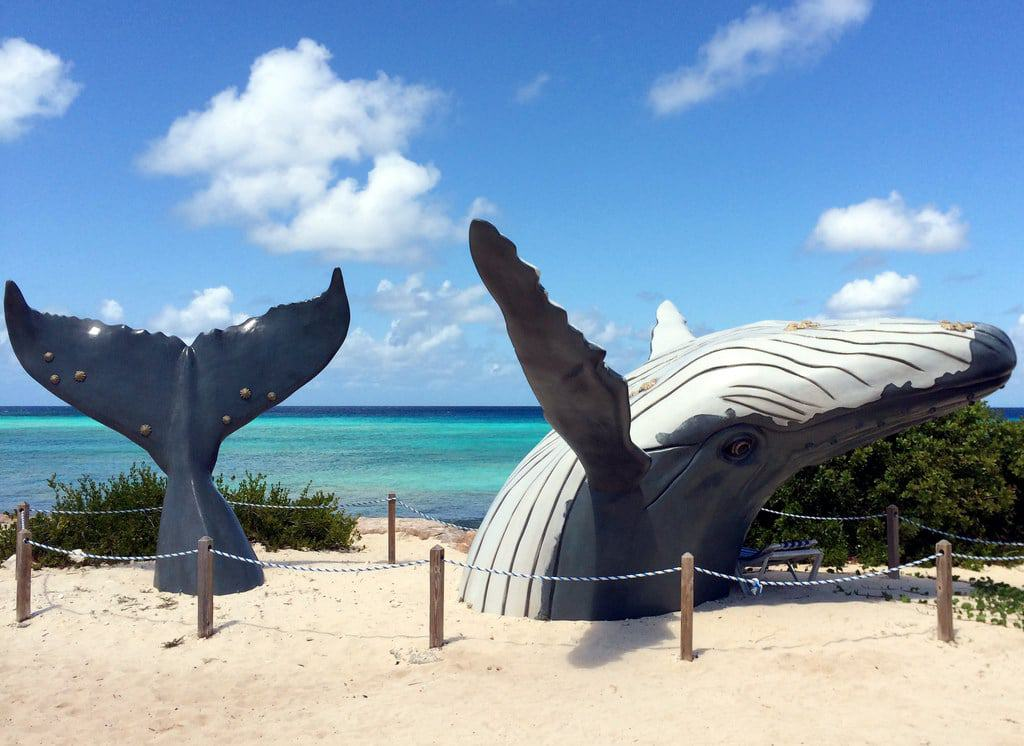 Turks and Caicos Islands - Grand Turk - Humpback Whale Monument