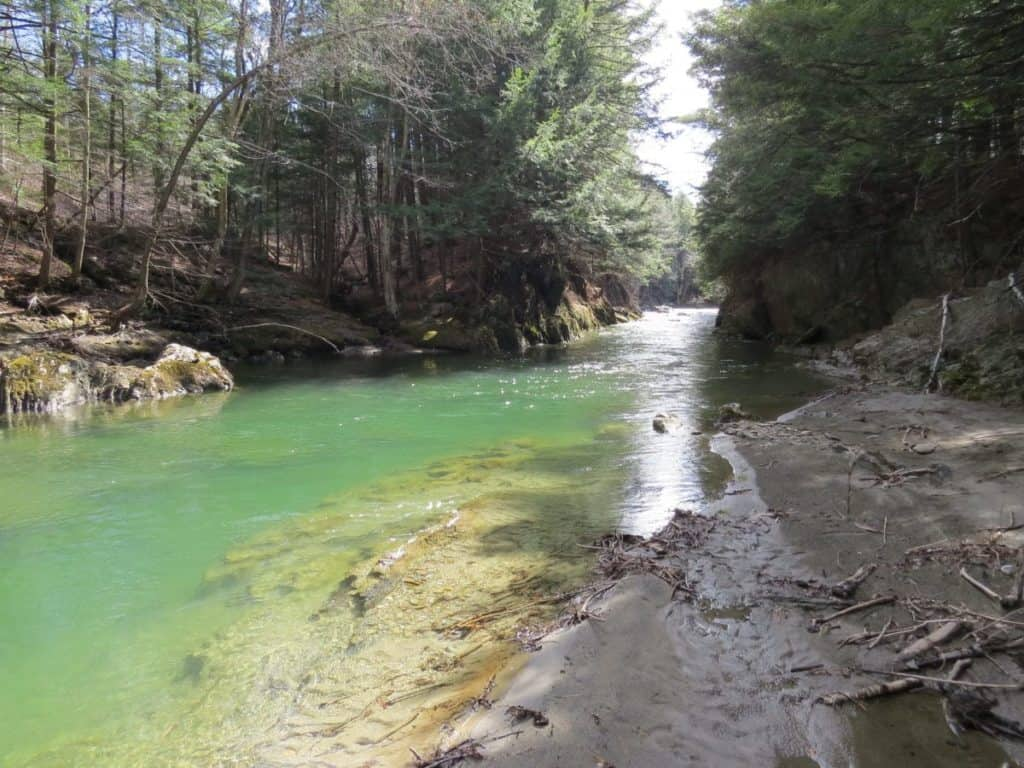 Image result for dog river swimming hole