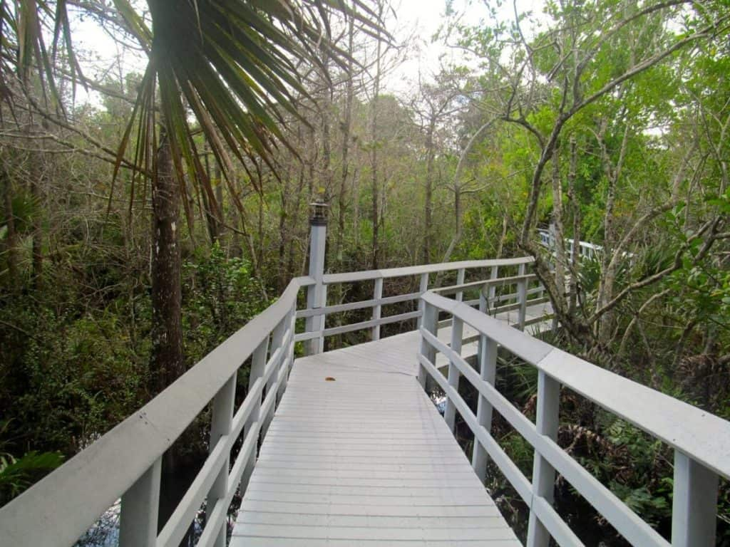 Fern Forest Nature Park