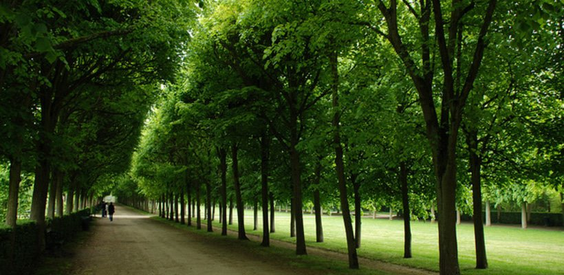 Forest of Compiegne