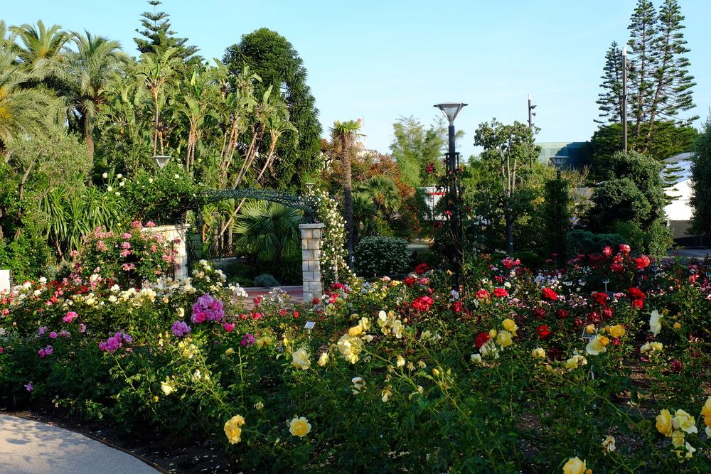Princess Grace Rose Garden