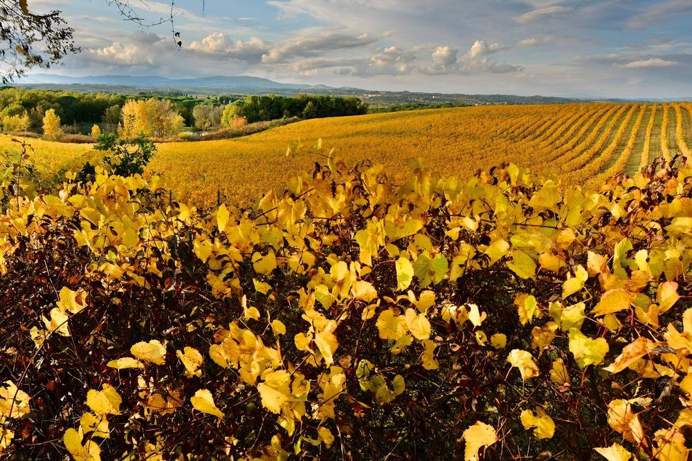 Chianti Wine Route 25 best things to do in italy 25 Best Things to Do in Italy Chianti Wine Route  Single Post Template 33 Chianti Wine Route