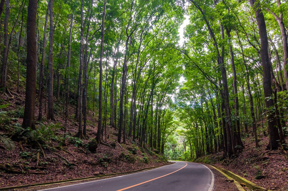 25 Best Things To Do In Bohol The Philippines The