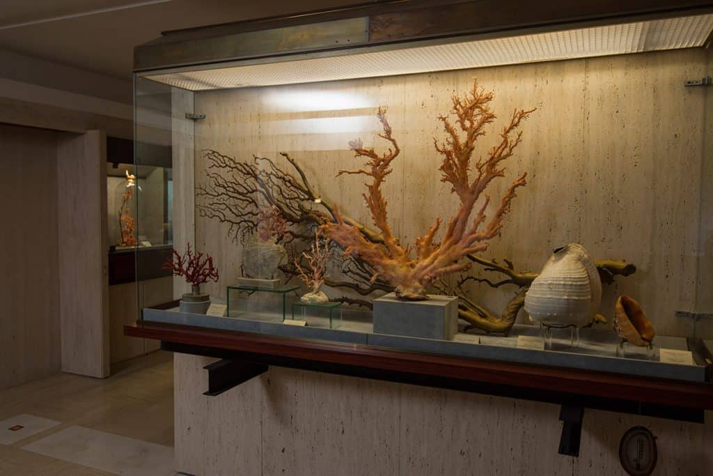 Museum Of Coral