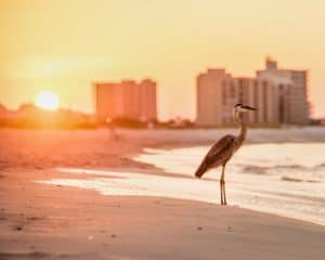 Orange Beach, Alabama