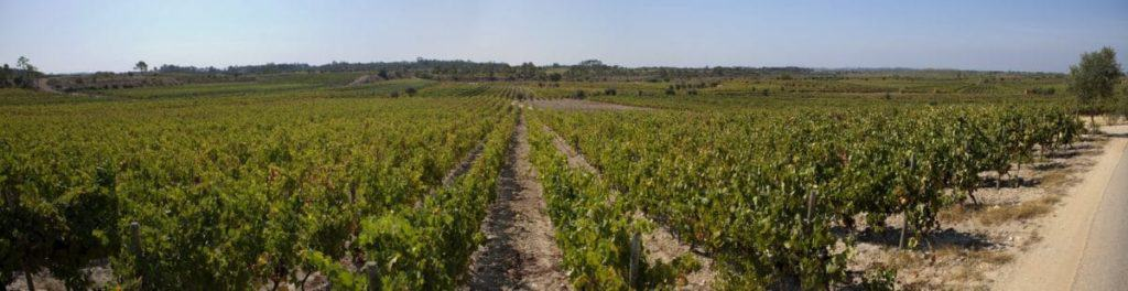 Wine Tours Cantanhede