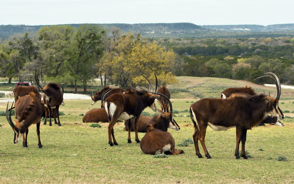 Fossil Rim Wildlife Center, Glen Rose
