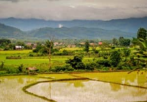 Rice Fields in Luang Namtha