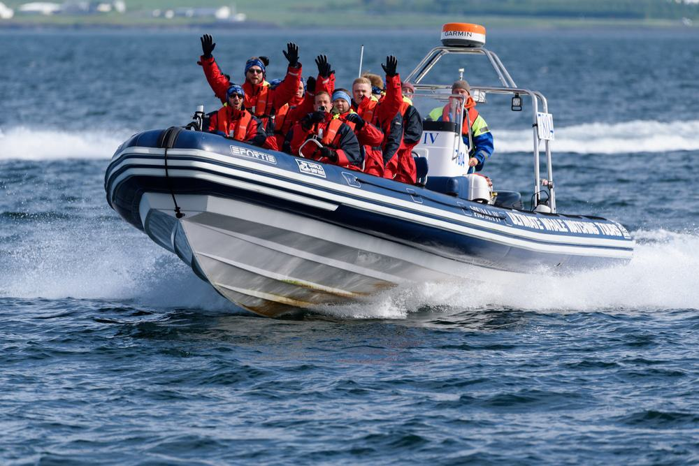 Whale Watching And Puffin Tours