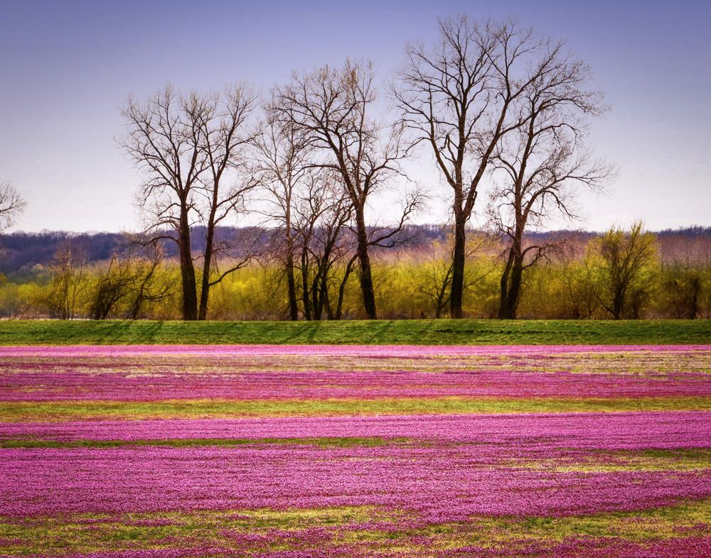 spring in Missouri, Midwest