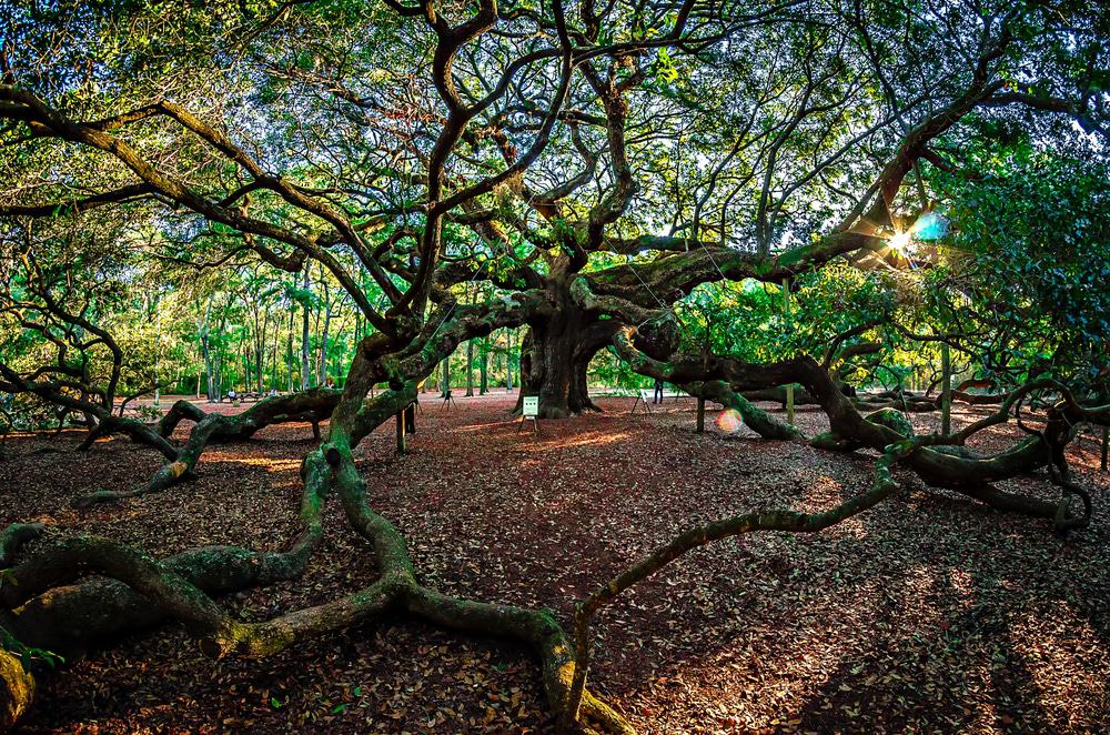17 Most Beautiful Places To Visit In South Carolina Page
