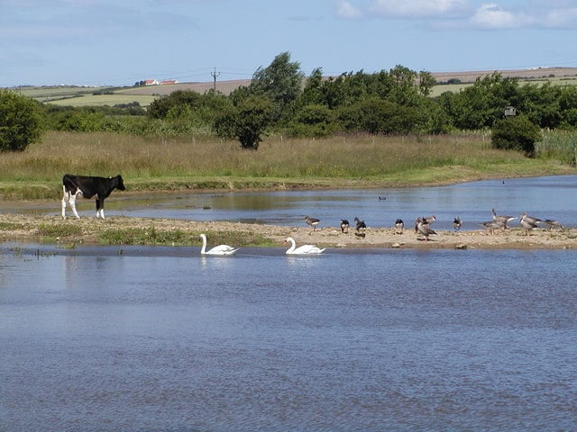 Filey Dams Nature Reserve