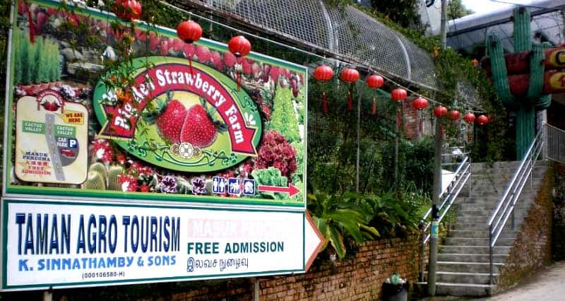Big Red Strawberry Farm, Cameron Highlands