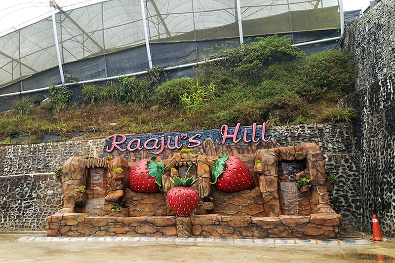raju's hill strawberry farm