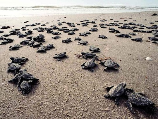 Juara Turtle Hatchery