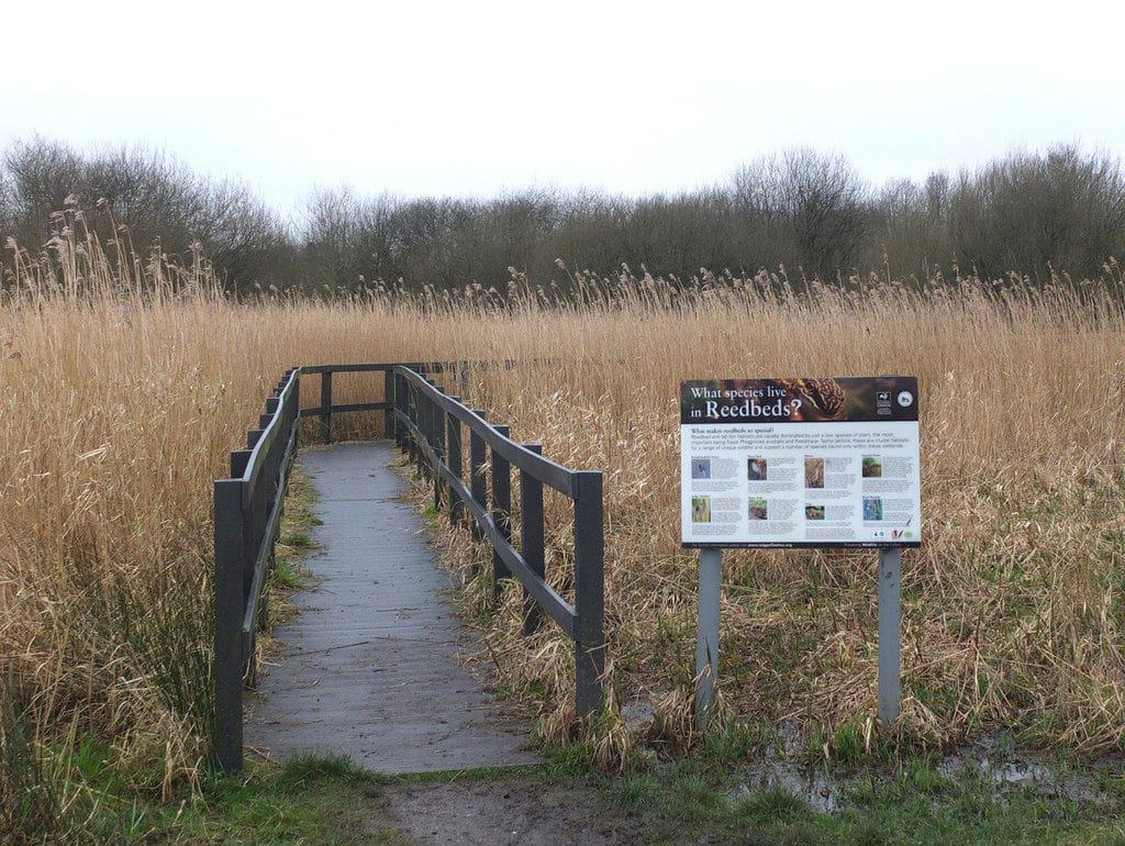 Wigan Flashes Nature Reserve