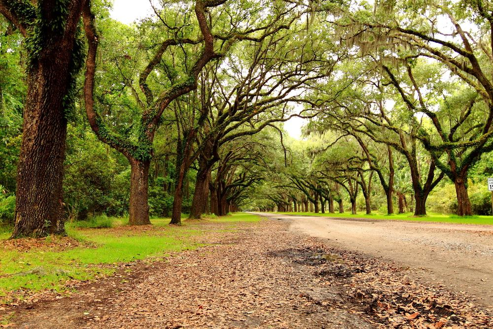 Wormsloe Historic Site, Isle of Hope