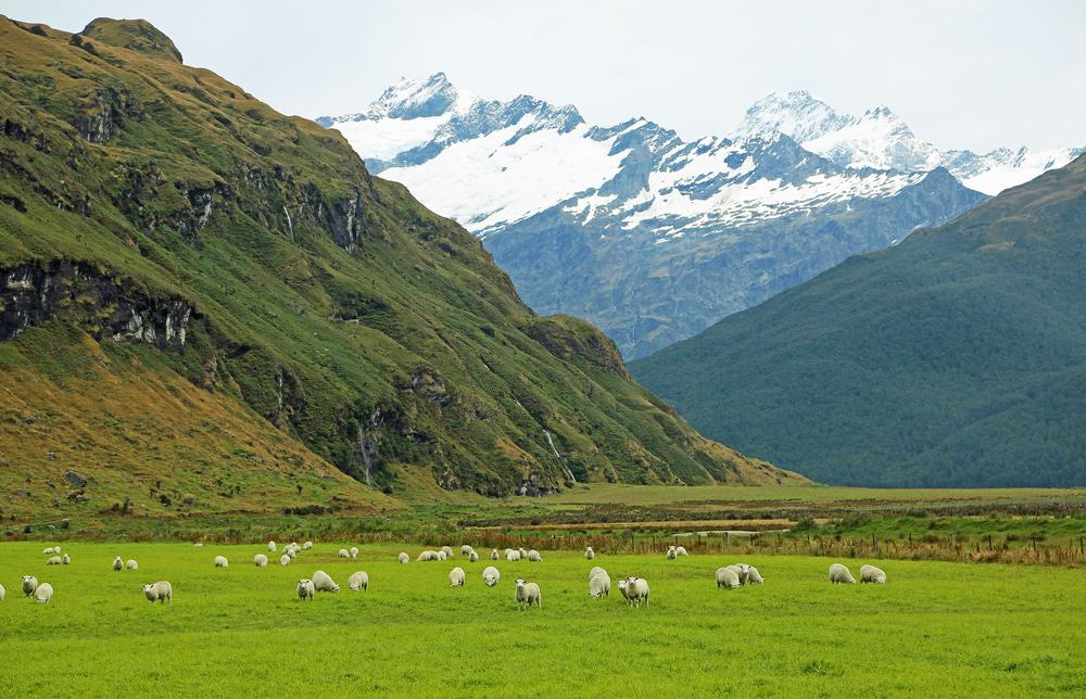 Mt Aspiring National Park, New Zealand