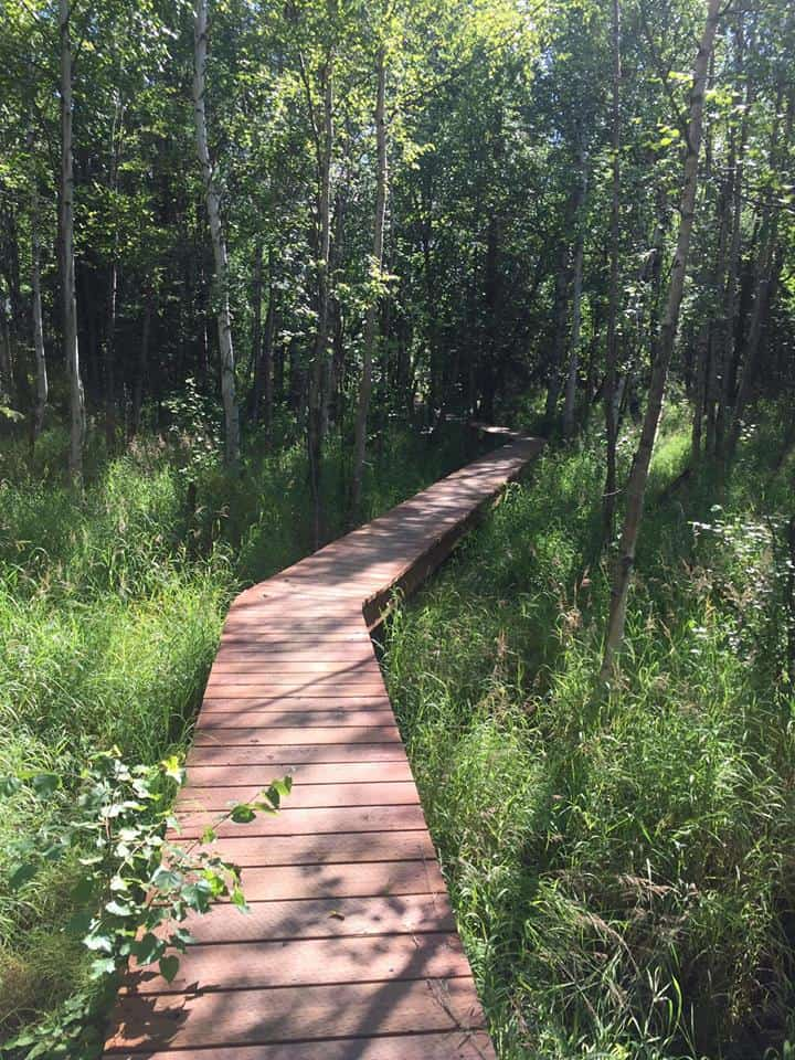 Wasilla Creek Wetlands Trail