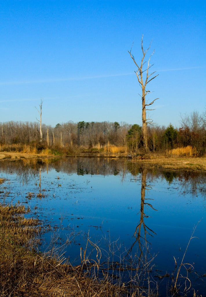 Ebenezer Swamp Ecological Preserve