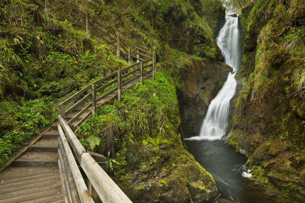 Glenariff Waterfall and Forest