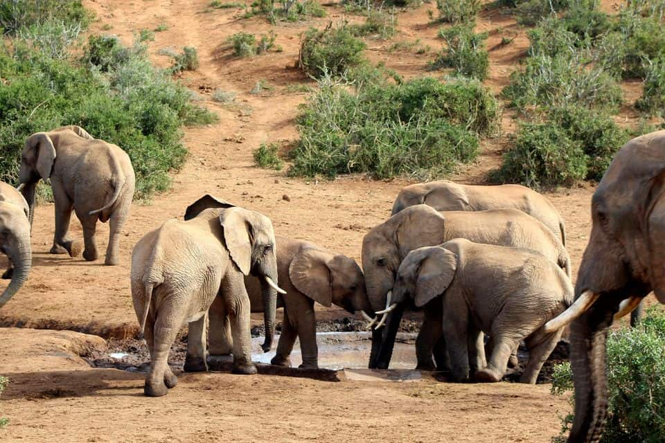 Addo Elephant National Park Full-Day Tour