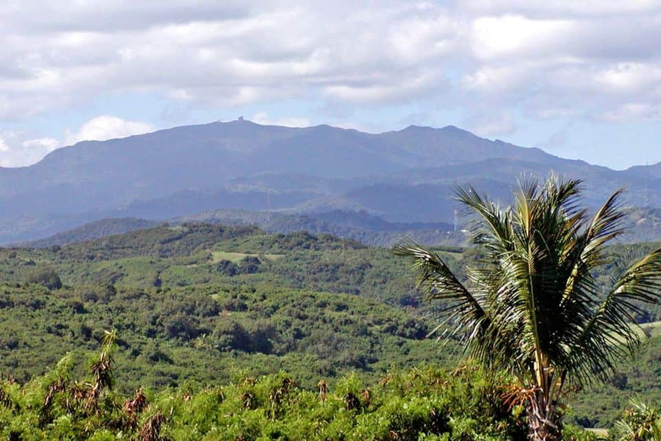 El Yunque Rainforest Half-Day Tour