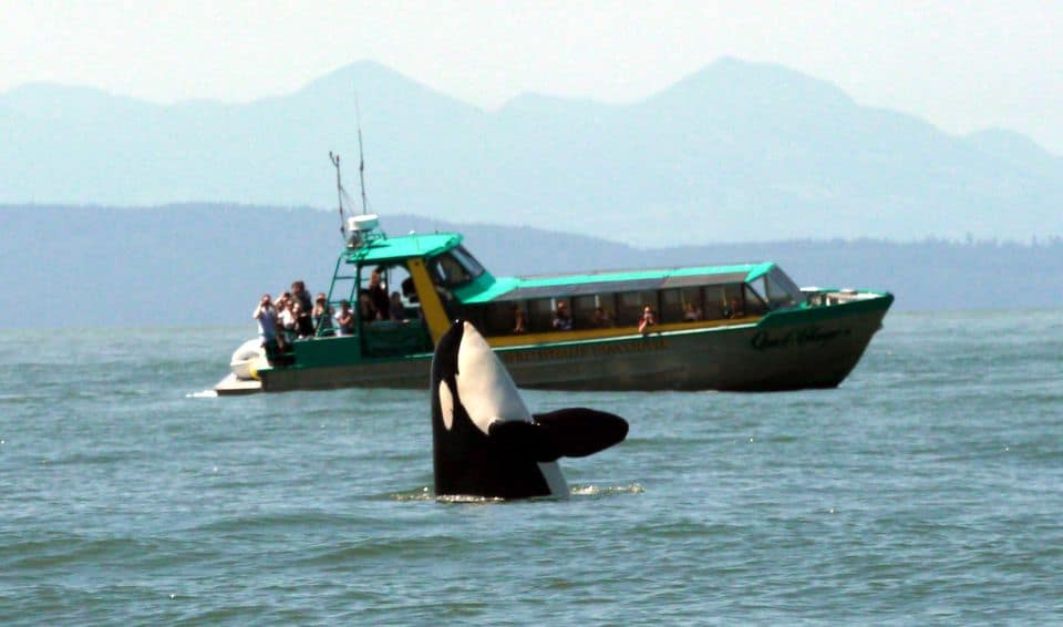 Vancouver Whale Watching Safari