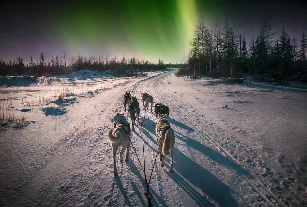 Northern Lights Husky