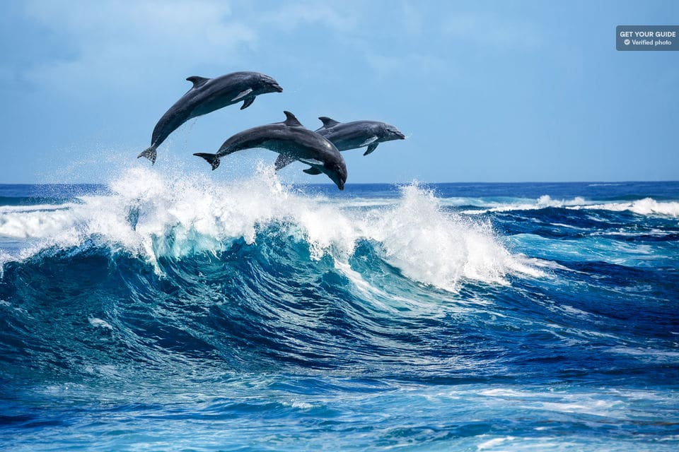 Dolphins And Snorkeling Cruise To Lanai From Lahaina