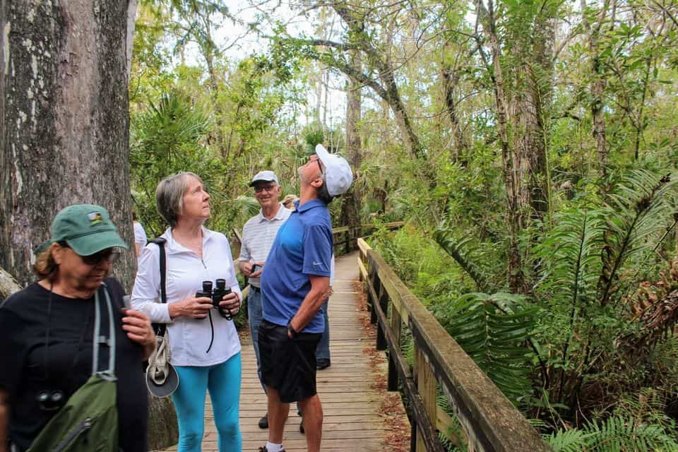 Everglades Airboat Ride And Nature Walk