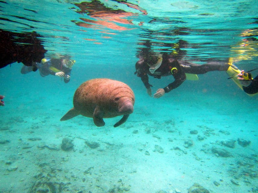 Manatees Swim, Snorkel And Boat Day Tour