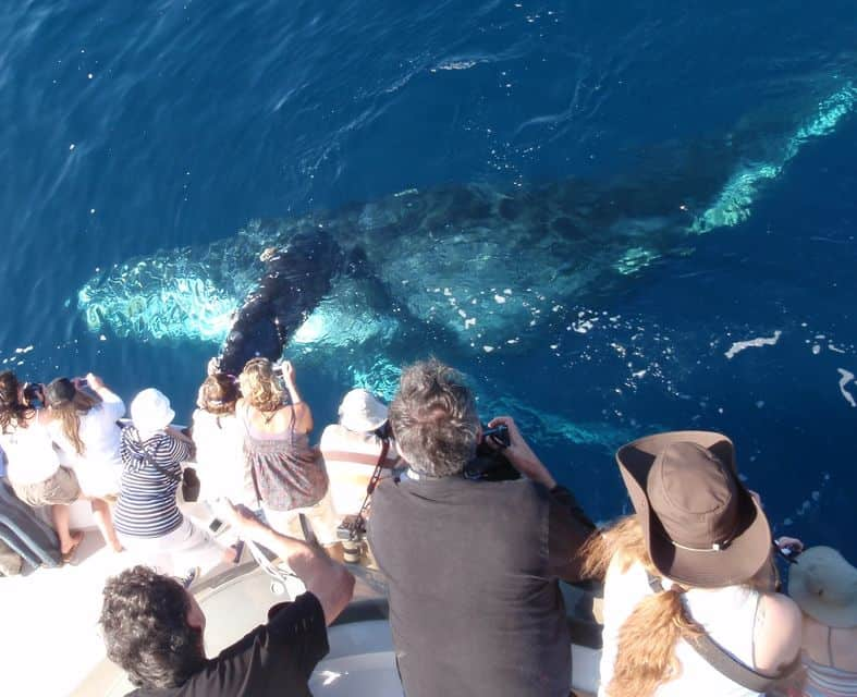 Newport Beach Whale Watching Tour