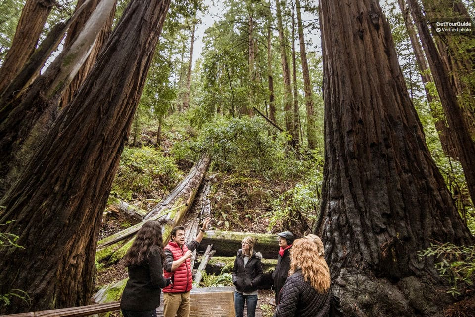 Redwoods And Wine Country Full-Day Tour