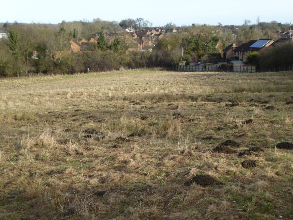 Great Oakley Meadow