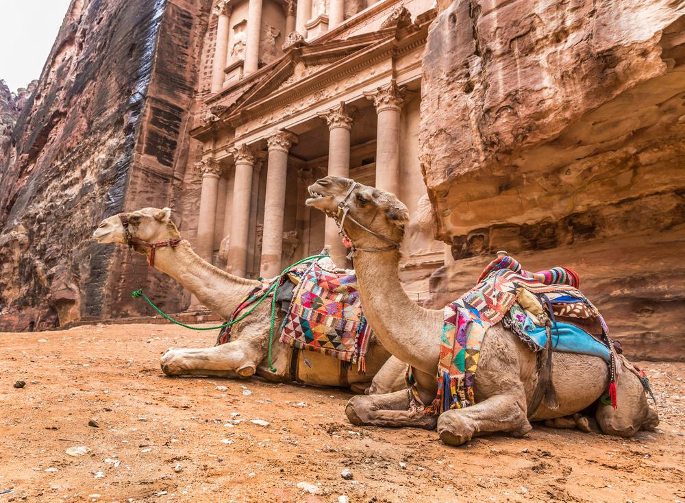Camels In Front Of Petra, Jordan