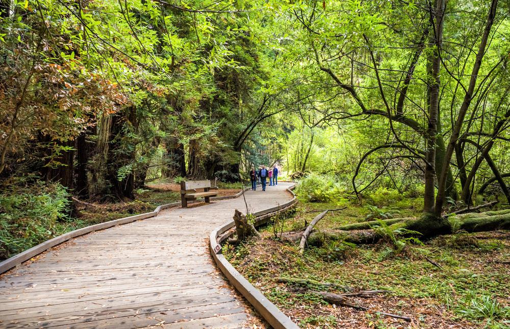 15 Best Muir Woods Tours - The Crazy Tourist