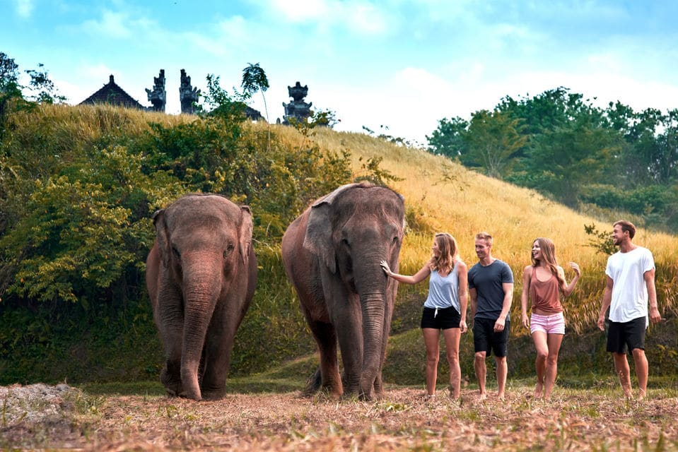 Elephant Care Experience At Bali Zoo
