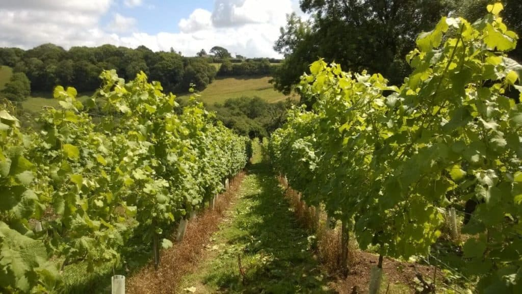 Looe Valley Vineyard