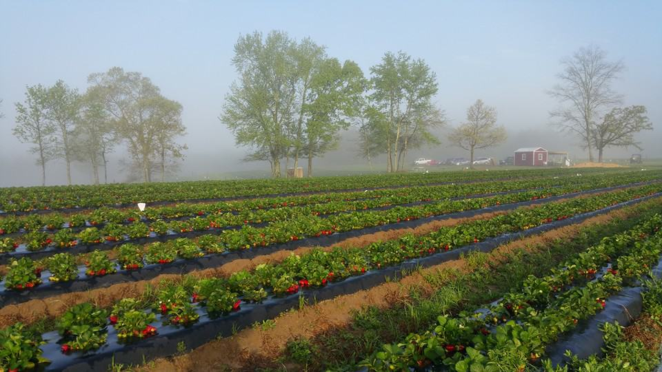 Sugar Hill U-Pick Farms