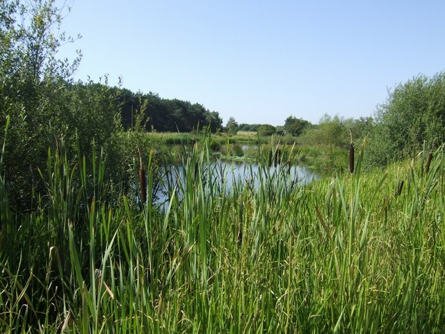 Pelsall North Common