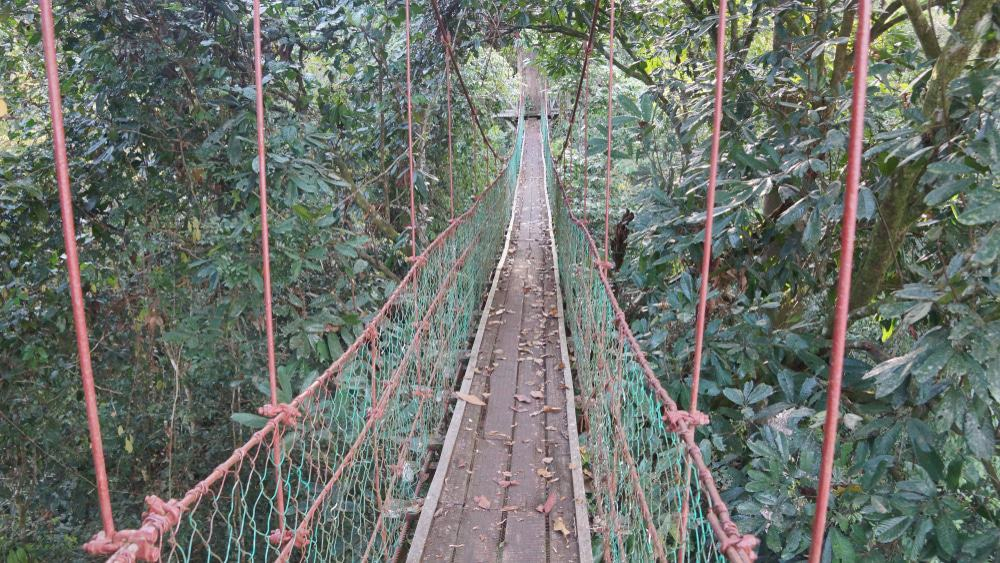 Danum Valley Trek