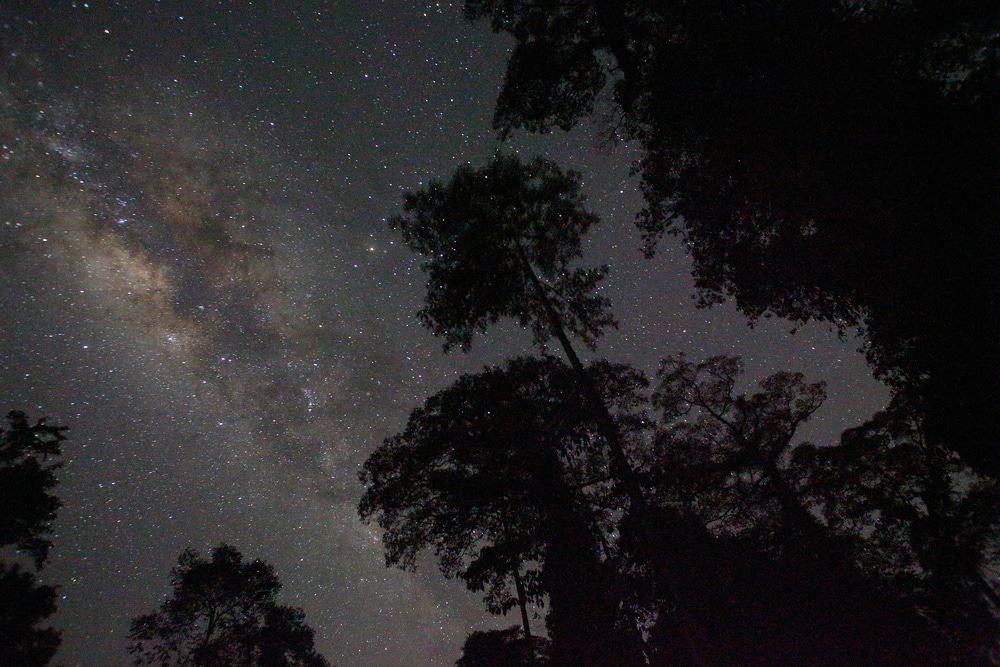 Danum Valley Night